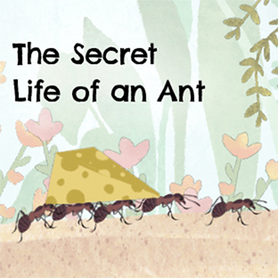 The Secret Life of a Ant