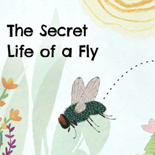 The Secret Life of a Fly