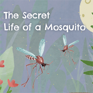 The Secret Life of Mosquitoes