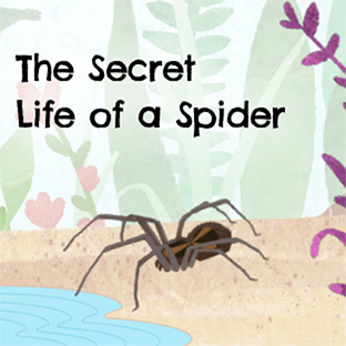 The Secret Life of a Spider