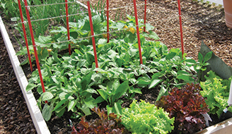 How To Prevent Bugs From Eating Vegetables in Your Garden