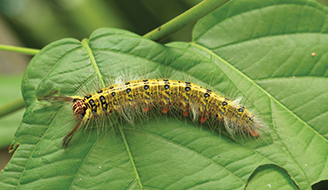 How To Control and Prevent Caterpillar Infestations in Your