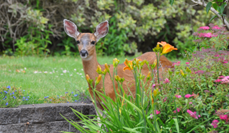 Protect Your Garden Lawn From Animals Ortho