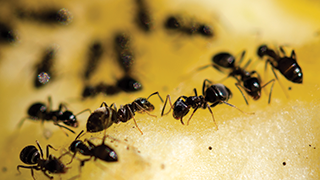 How To Get Rid of Bugs In Your House - Ortho