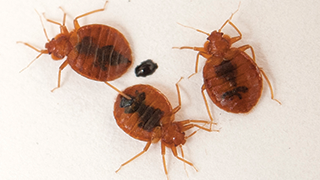 Don T Let Bed Bugs Into Your House