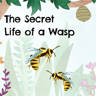 The Secret Life of a Wasp