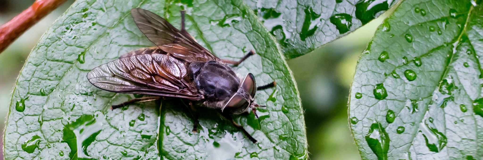 How to Keep Horse Flies Away from Your Yard