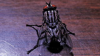 House fly sitting on a table.