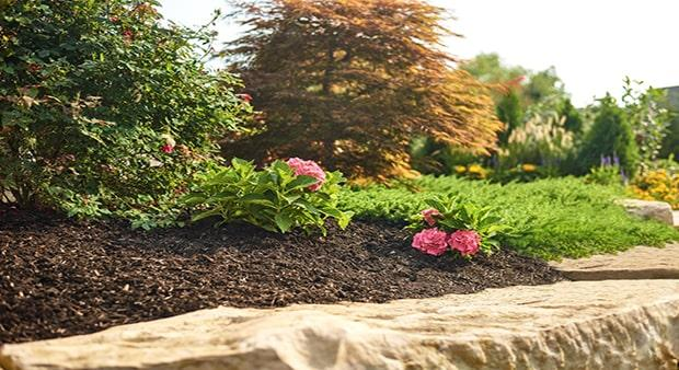6 Tips For A Weed Free Landscape Ortho
