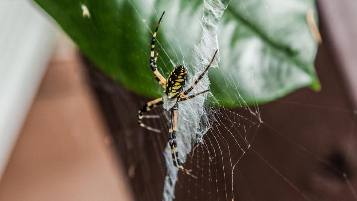 the benefits of spiders in the garden ortho