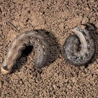 Image of Cutworm