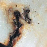 Image of Codling Moth - Pear