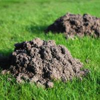 Image of Pocket Gophers - Trees and Garden