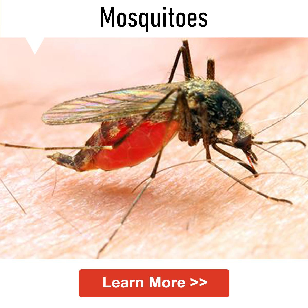 How To Keep Mosquitoes Away From Your Home Control Mosquitoes