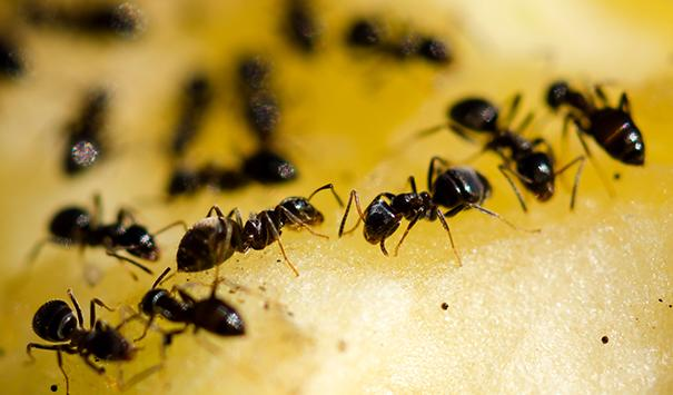 Ants Can Cause Trouble In The Kitchen And Pantry.