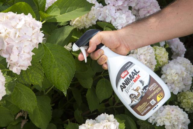 Consumer using product and spraying garden with bottle
