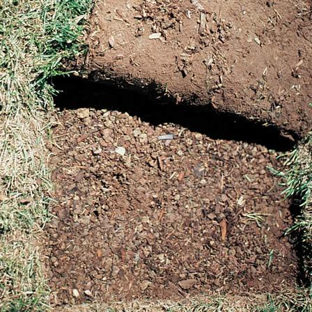 Image of Sod Fails to Establish