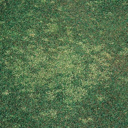 Image of Bentgrass - Hardscapes