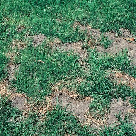 Image of Moles - Lawn