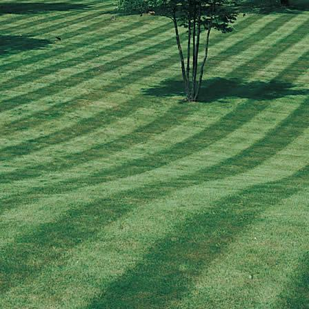 Image of Lawn