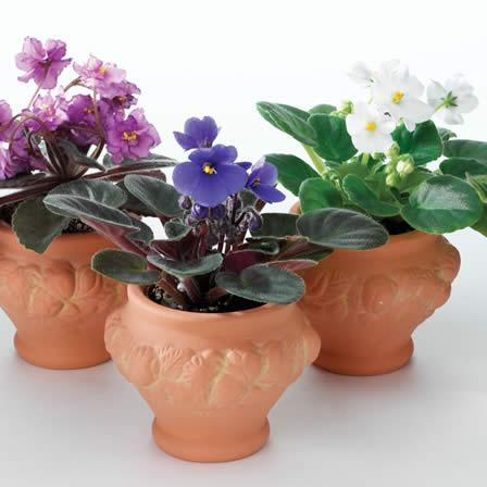 Image of Houseplants